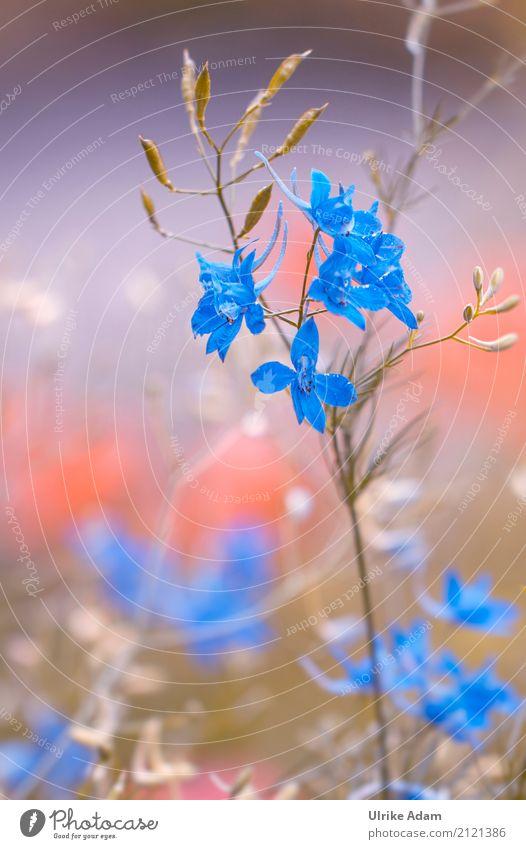 Wilder Rittersporn Design Dekoration & Verzierung Natur Pflanze Sommer Blume Blüte Wildpflanze wild Feldrittersporn Ackerrittersporn Delphinium consolida Wiese