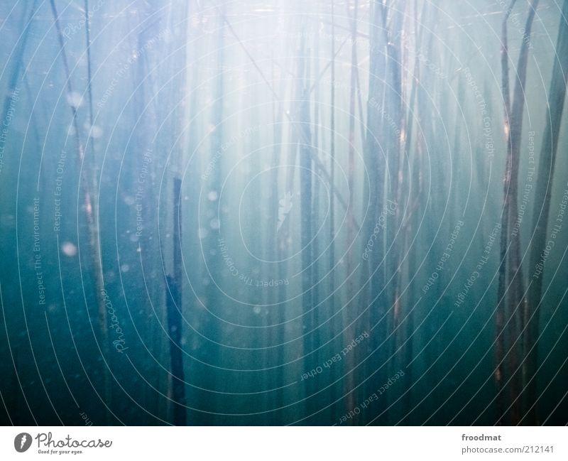 |||||||||||||| | Natur Wasser blau Sommer Umwelt Wachstum geheimnisvoll Stengel Unterwasseraufnahme Schilfrohr Surrealismus vertikal minimalistisch Zeit Gras