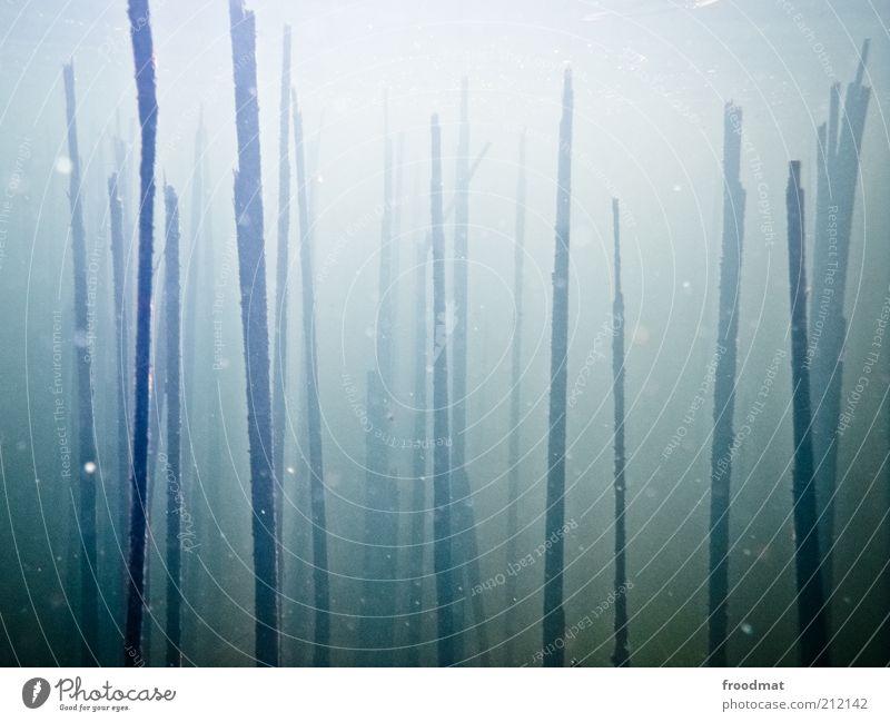||||| | | ||| Natur Wasser blau Pflanze Tod Umwelt verfaulen geheimnisvoll Stengel abstrakt Verfall Schilfrohr gebrochen Urelemente mystisch vertikal