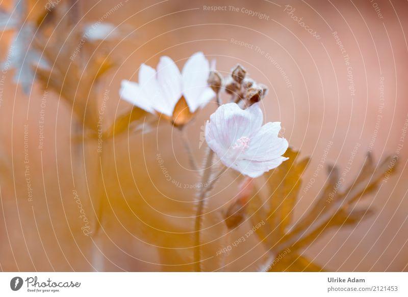 Malven (Malvaceae) Design Dekoration & Verzierung Tapete Bild Poster Kunst Fotokunst Natur Pflanze Sonnenlicht Sommer Blume Blatt Blüte Malvengewächse