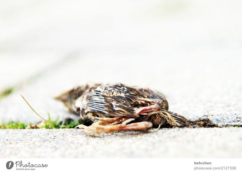 lebenselixier | zu wenig davon Tier Tierjunges Traurigkeit Gras klein Garten Tod Vogel Feder Flügel Vergänglichkeit Trauer Krallen Mitgefühl verlieren