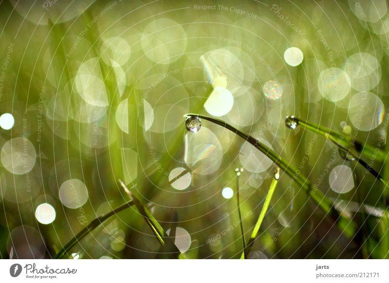 Kleinigkeiten Umwelt Pflanze Wasser Wassertropfen Frühling Sommer Klima Klimawandel Schönes Wetter Gras Wiese einfach fantastisch frisch nass natürlich schön