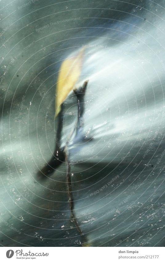 float Natur Wasser Pflanze schwarz dunkel Umwelt grau Bewegung glänzend Fluss Ende Ast Flüssigkeit Zweig fließen Im Wasser treiben
