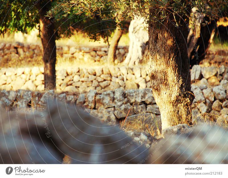 Wegbegleiter. Umwelt Natur Landschaft Pflanze Klima Schönes Wetter Wärme Dürre ästhetisch ruhig zurückziehen Einsamkeit Olivenbaum Olivenhain Plantage Spanien