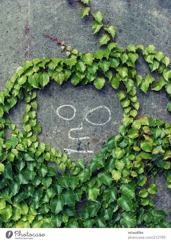 herr sommer androgyn Kunst Gemälde Umwelt Natur Sommer Pflanze Efeu Grünpflanze Ranke Beton Smiley Wachstum natürlich grau grün Menschlichkeit Umweltschutz