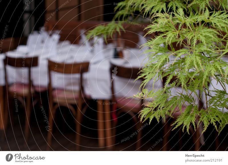 Vor dem Fest Pflanze grün weiß Baum Blatt Stil Feste & Feiern braun Tisch Stuhl Veranstaltung Restaurant Vorfreude Speisetafel festlich Zweige u. Äste
