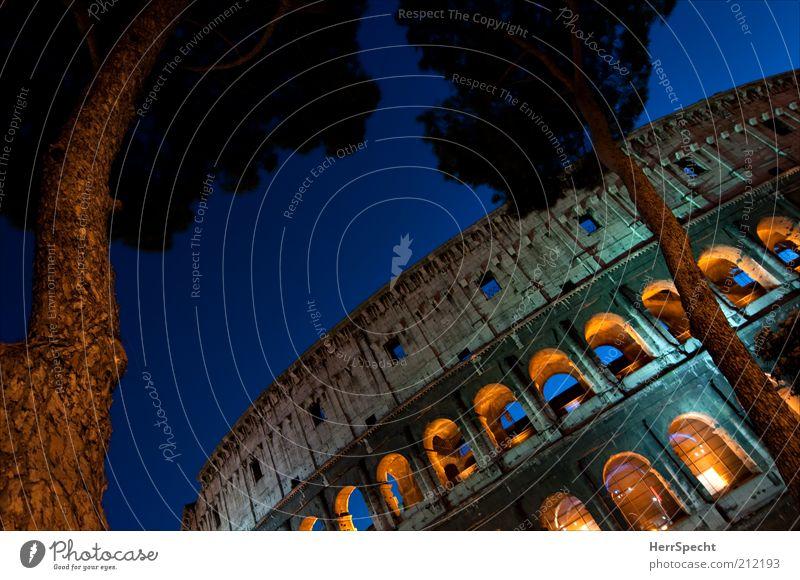 Kolossal alt Baum blau gelb grau braun Nachthimmel Denkmal historisch Baumstamm Wahrzeichen Abenddämmerung Rom Italien Sightseeing Sehenswürdigkeit