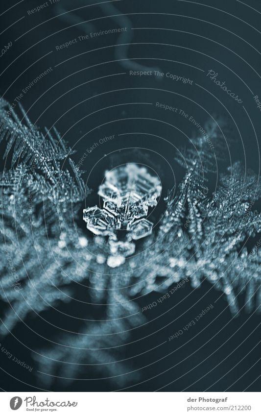 Kristallklar Umwelt Natur Winter Klimawandel Eis Frost kalt Schneeflocke gefroren Farbfoto Außenaufnahme Makroaufnahme Textfreiraum oben Textfreiraum unten Tag