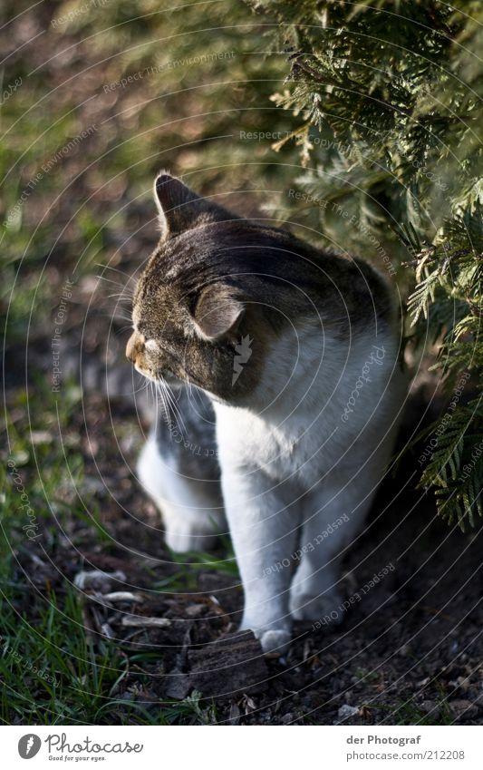 Träumer Tier Haustier Katze Tiergesicht Fell Pfote 1 Denken Blick träumen nachdenklich Farbfoto Außenaufnahme Tag Unschärfe Tierporträt Halbprofil Natur Gras