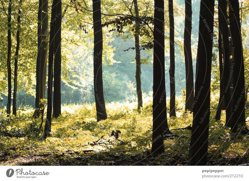 waldesruh Natur Baum grün Pflanze Sommer Ferien & Urlaub & Reisen Wald Gras Landschaft Erde Ausflug Sträucher Baumstamm Moos Waldlichtung