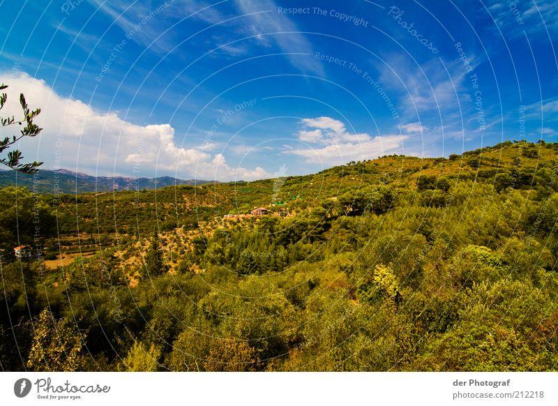 Somewhere else Natur Himmel Baum Pflanze Wolken Ferne Gras Berge u. Gebirge Landschaft Sträucher Hügel entdecken Schönes Wetter Blauer Himmel Licht