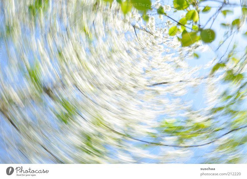 verdrehte welt .. Umwelt Natur Pflanze Luft Himmel Frühling Schönes Wetter Baum Frühlingsgefühle Blatt Ast rotieren Blüte Farbfoto mehrfarbig Außenaufnahme