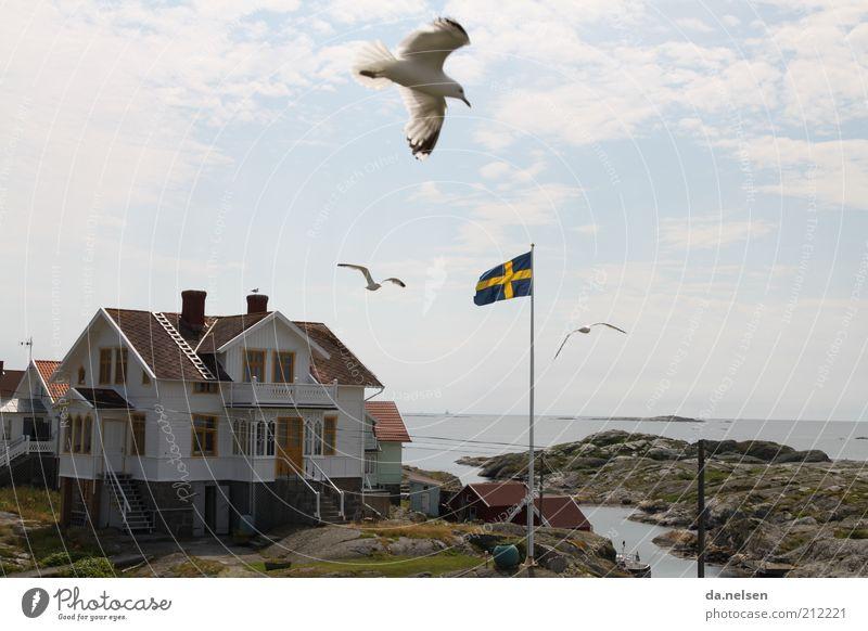 Küstenvogel Himmel Meer Ferien & Urlaub & Reisen Haus Tier Ferne Bewegung Landschaft Vogel Fahne Wildtier Möwe Schweden Gebäude Skandinavien