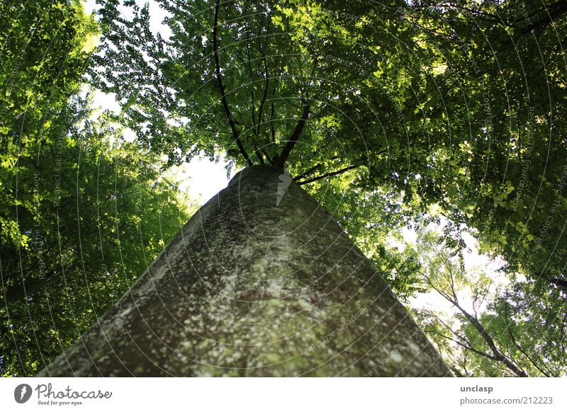 Tree walk Himmel Natur grün Baum Sommer Wald Landschaft Denken Wetter Zufriedenheit Kraft natürlich authentisch außergewöhnlich beobachten fantastisch