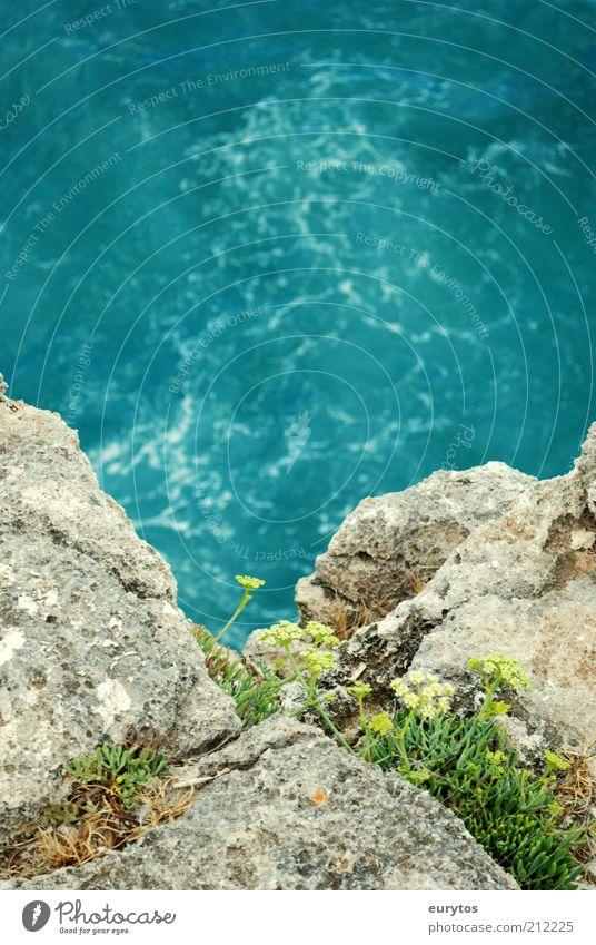 Spring! Umwelt Natur Landschaft Pflanze Wasser Sommer Klima Klimawandel Wetter Schönes Wetter Blume Gras Sträucher Grünpflanze Wellen Küste Strand Bucht Riff