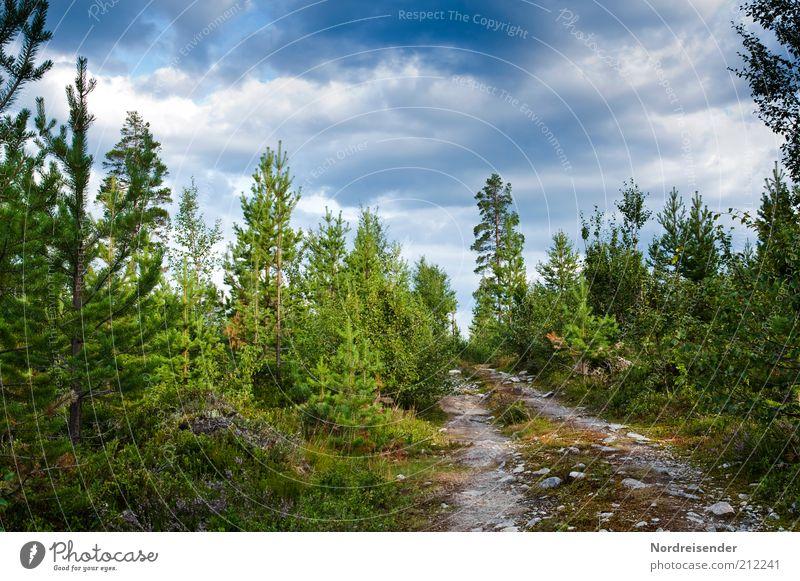 Unterwegs ruhig Ausflug Freiheit Sommer Natur Landschaft Pflanze Wald Wege & Pfade mehrfarbig Einsamkeit Stimmung Fußweg Skandinavien Schweden Farbfoto
