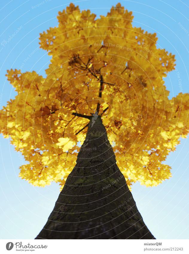 Der Herbst ist da. Natur alt Baum Blatt gelb Farbe Zeit Perspektive ästhetisch Jahreszeiten aufwärts Baumstamm Baumkrone vertikal Baumrinde