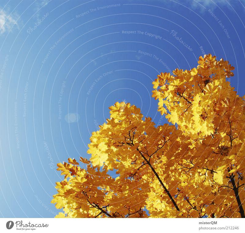 Farbkontrast. Natur blau schön Pflanze Blatt Umwelt Landschaft gelb Herbst gold Schönes Wetter Vergänglichkeit Ast Zweig Herbstlaub Blauer Himmel