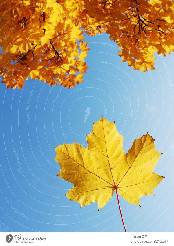 Der Herbst steht vor der Tür. Natur Himmel Baum Pflanze gelb orange Wind Wetter Umwelt ästhetisch Klima Jahreszeiten aufwärts Schönes Wetter