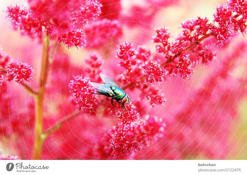 glänzend Natur Pflanze Sommer schön Blume rot Tier Auge Blüte Wiese Garten fliegen rosa Park leuchten Wildtier