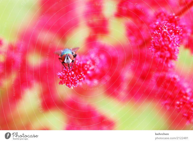im auge des betrachters Natur Pflanze Sommer schön Blume Tier Blüte Wiese Garten Park leuchten Wachstum Fliege Blühend Schönes Wetter Flügel