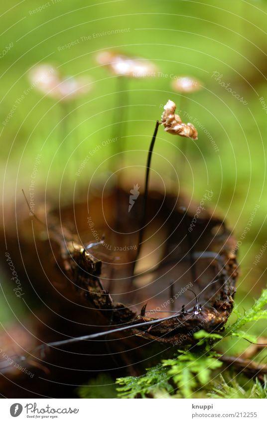 Wunderwald Umwelt Natur Pflanze Tier Erde Sommer Schönes Wetter Moos Farn Wildpflanze Urwald Holz Wachstum braun grün Sicherheit Schutz Baumrinde Baumstamm Pilz