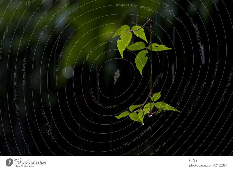 199 Unwetterregentropfen Natur Wasser grün Blatt Regen Landschaft Umwelt nass Wassertropfen Wachstum natürlich Gewitter Urelemente hängen schlechtes Wetter