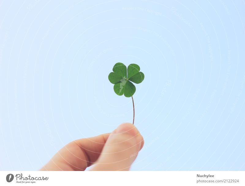 Hand haltend Kleeblatt am blauen Himmel Stil Garten Dekoration & Verzierung Natur Pflanze Gras Blatt Wiese frisch natürlich retro grün Farbe Frieden Idee