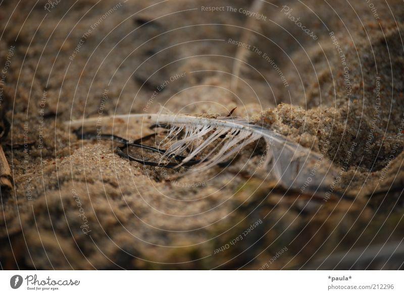 Liegen geblieben Natur Erde Sand Strand Feder alt dreckig dunkel klein nass natürlich braun grau weiß Traurigkeit Verzweiflung Ende stagnierend Vergänglichkeit