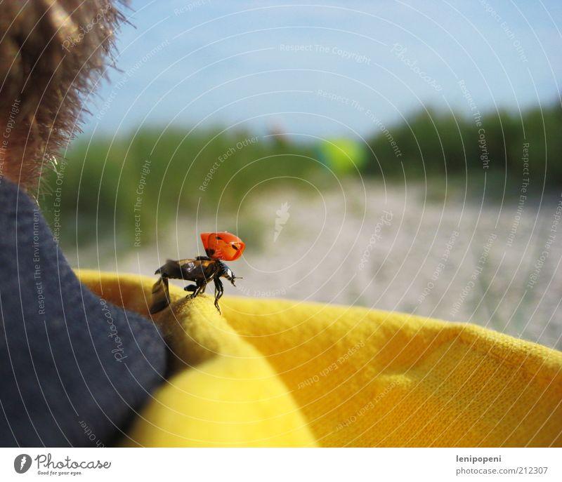 Karienmäfer Ferien & Urlaub & Reisen Ausflug Freiheit Sonne Strand Haare & Frisuren Natur Tier Sand Sommer Nordsee Käfer Flügel fliegen frei Lebensfreude