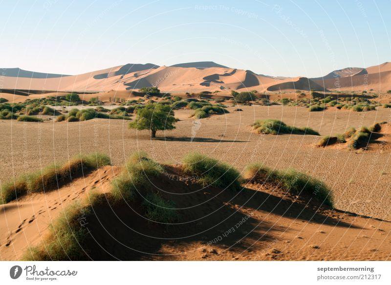 Wüstenwelt ruhig Einsamkeit Freiheit Sand Landschaft Sträucher Spuren Hügel Düne Schönes Wetter Safari Wolkenloser Himmel Grasbüschel