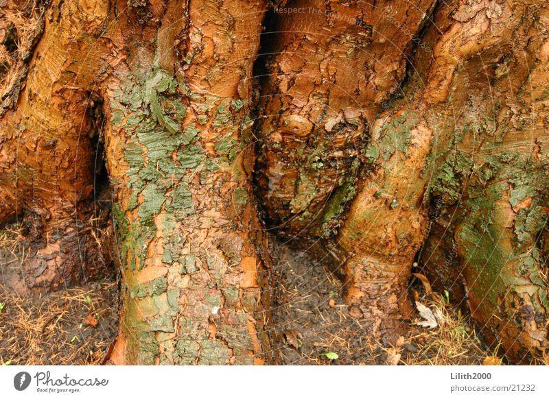 Alter Baum Baumrinde braun Pflanze Park Natur