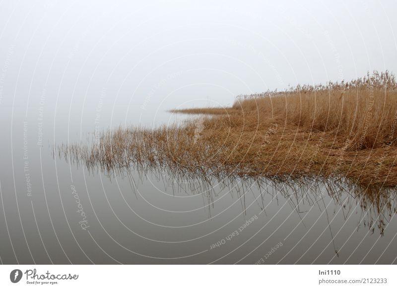 Morgennebel Umwelt Natur Landschaft Pflanze Urelemente Luft Wasser Himmel Frühling Wetter Nebel Schilfrohr Küste Seeufer blau braun gelb grau schwarz Stimmung