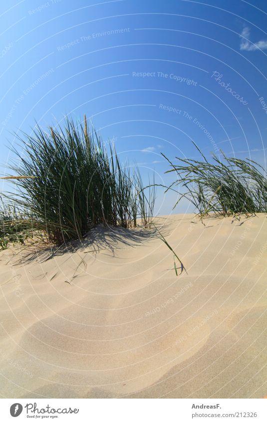 Dünen Ferne Freiheit Sommer Strand Natur Landschaft Pflanze Sand Schönes Wetter Gras Küste blau Nordseestrand strandhafer Blauer Himmel Stranddüne Farbfoto