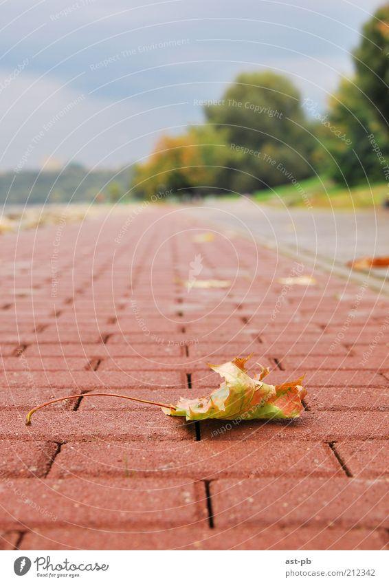 Natur Blatt Wolken Herbst Traurigkeit Park Sehnsucht Grünpflanze Wolkenloser Himmel