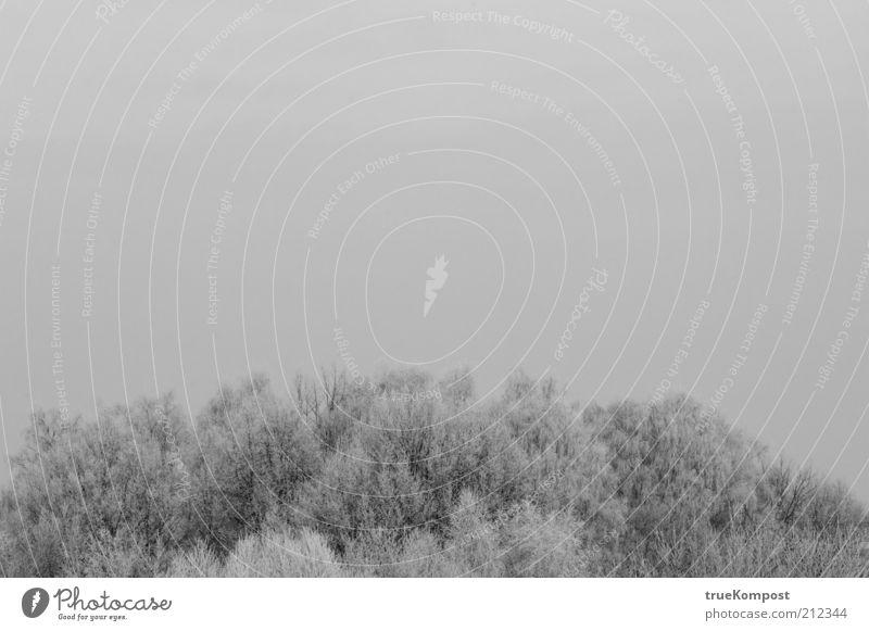Winterinsel Umwelt Natur Landschaft Himmel schlechtes Wetter Schnee Baum Wald Traurigkeit Trauer Einsamkeit geheimnisvoll Horizont kalt Schwarzweißfoto