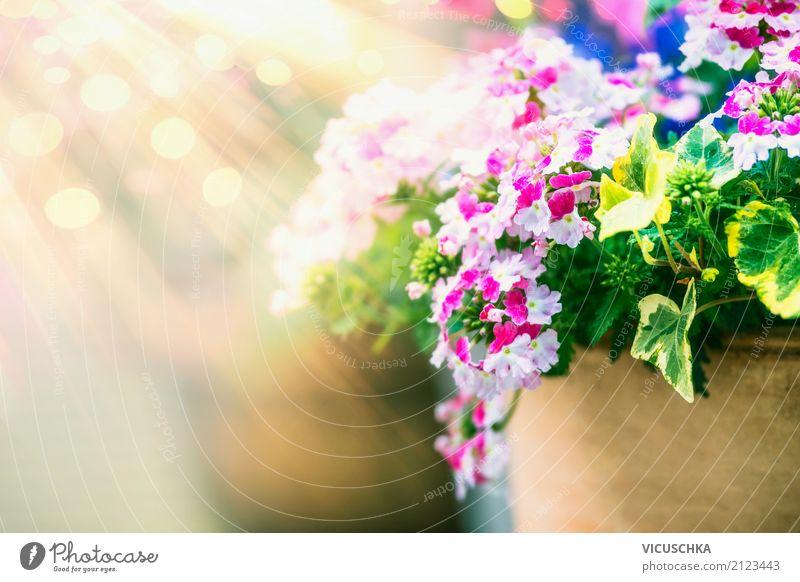 Sommer Blumen Topf und Sonnenstrahlen Lifestyle Design Garten Natur Pflanze Frühling Herbst Blüte gelb rosa Stil Blumentopf Unschärfe Außenaufnahme