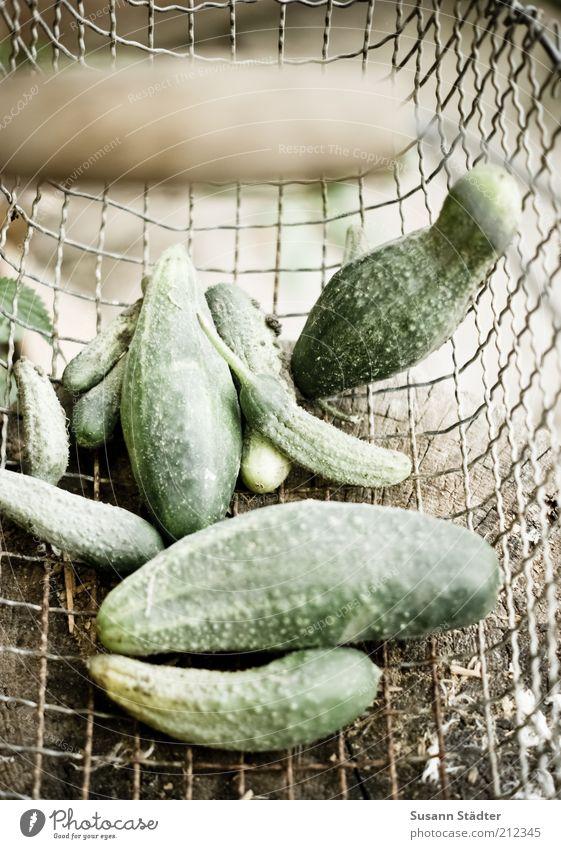 falsche Spreewälder Natur grün klein Lebensmittel groß frisch Ernährung Gesunde Ernährung Gemüse dünn dick lecker Bioprodukte Verschiedenheit