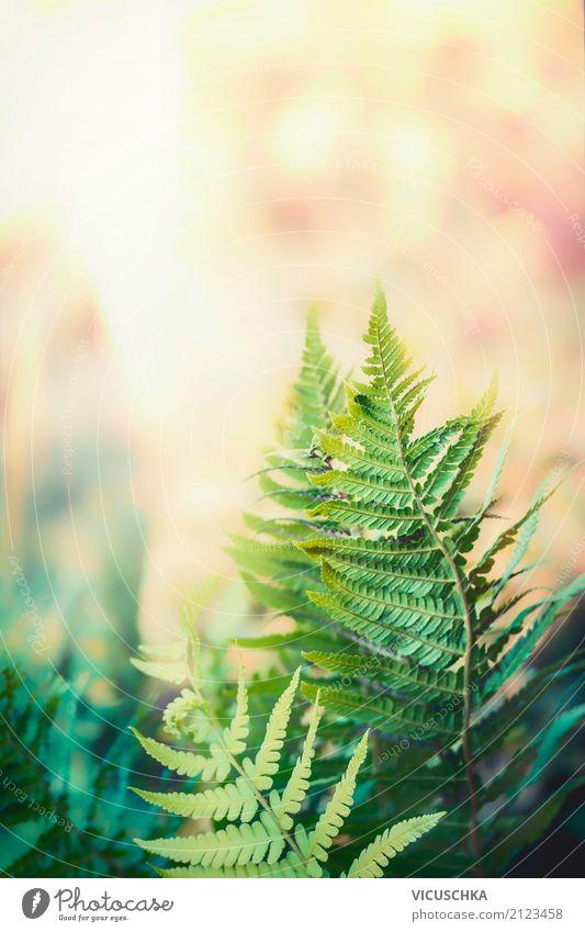 Farn Blätter mit sonnigen Natur Hintergrund Lifestyle Sommer Garten Pflanze Frühling Herbst Blatt Grünpflanze Park Wald Design Hintergrundbild Neuseeland