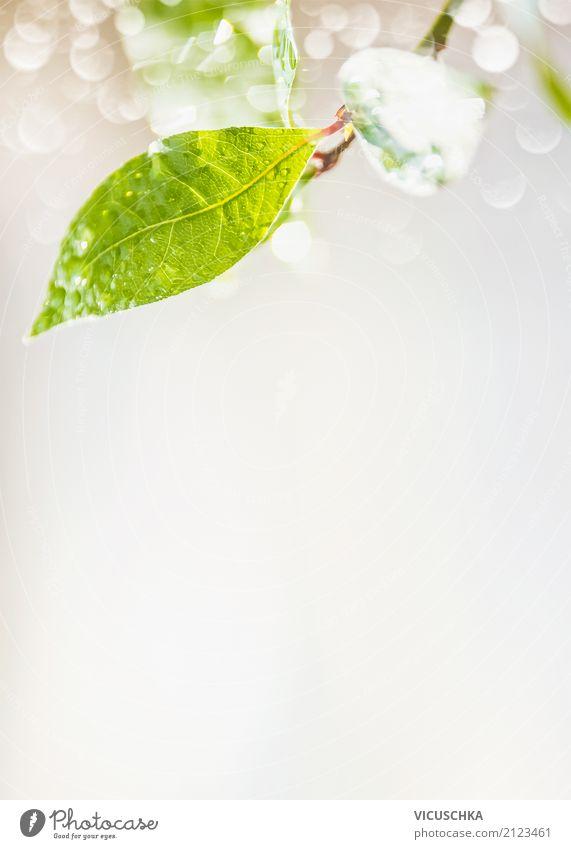 Grünes Blatt mit Regen Wassertropfen und Bokeh Design Sommer Umwelt Natur Pflanze Frühling Klima Grünpflanze Garten Park Urwald Hintergrundbild grün Naturliebe