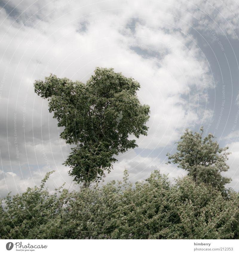 heimatfilm cd1 Umwelt Natur Landschaft Pflanze Luft Himmel Wolken Gewitterwolken Sommer Klima Klimawandel Wetter Schönes Wetter Unwetter Wind Sturm Baum