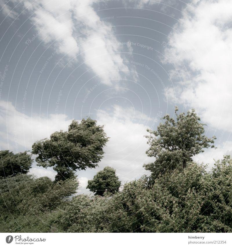 heimatfilm cd2 Umwelt Natur Landschaft Pflanze Luft Himmel Wolken Sommer Klima Klimawandel Wetter Schönes Wetter Wind Sturm Baum Sträucher Grünpflanze