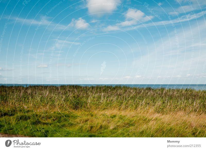 Einfach nur schön Wasser Himmel Pflanze Sommer Ferien & Urlaub & Reisen Wolken Ferne Erholung Wiese Gras Landschaft Küste Horizont Schönes Wetter Nordsee