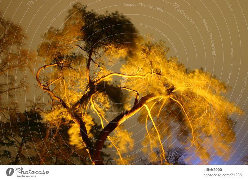 Burning Tree Baum Beleuchtung Ast Ostsee Zweig Scheinwerfer Kurpark Timmendorfer Strand