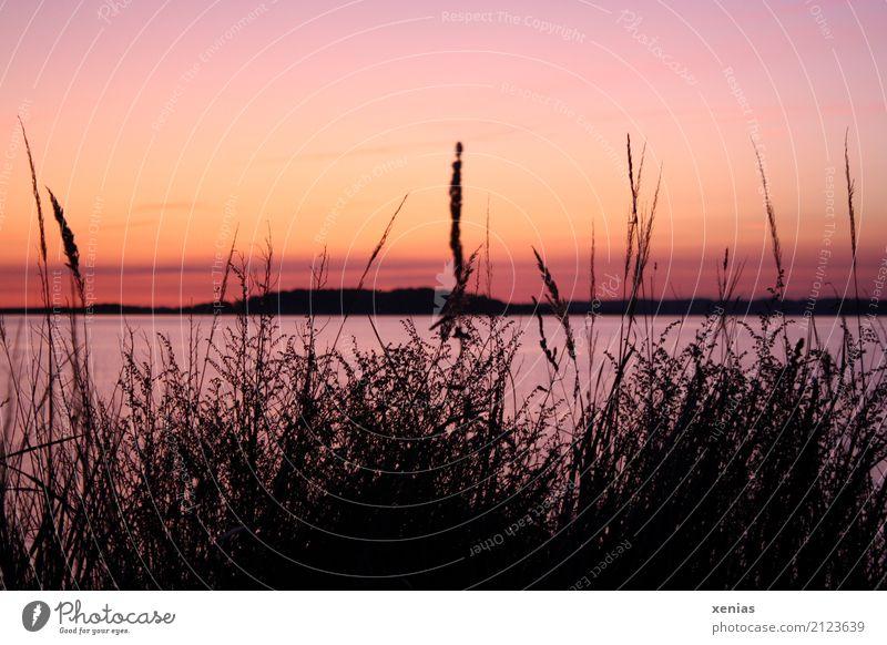 Sonnenuntergang Ferien & Urlaub & Reisen Sommer schön Meer rot Erholung ruhig schwarz gelb Herbst Küste Gras See orange Freizeit & Hobby