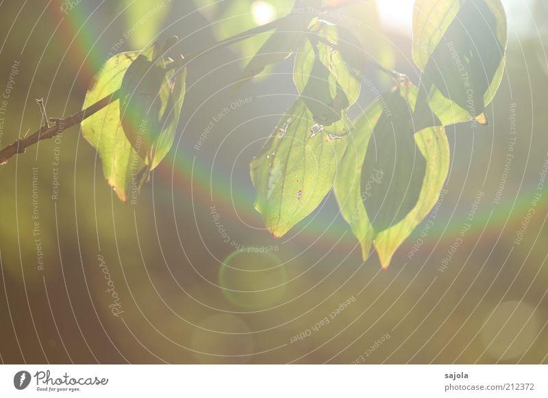 regenbogen umgekehrt Umwelt Natur Pflanze Baum Blatt grün Ast Prisma regenbogenfarben Regenbogen Lichterscheinung Lichtspiel Lichtbrechung Blendenfleck