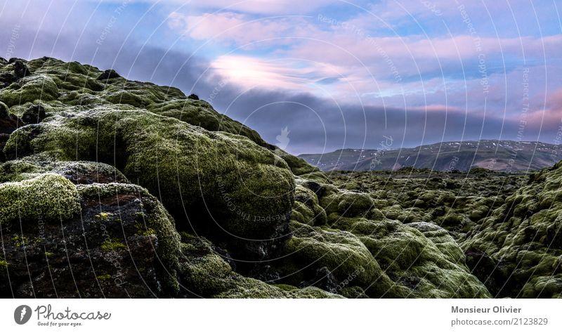 Lava Feld, Island Umwelt Natur Landschaft Pflanze Urelemente Moos Grünpflanze weich blau grün harmonisch fließen Lavafeld Reisefotografie Farbfoto Außenaufnahme