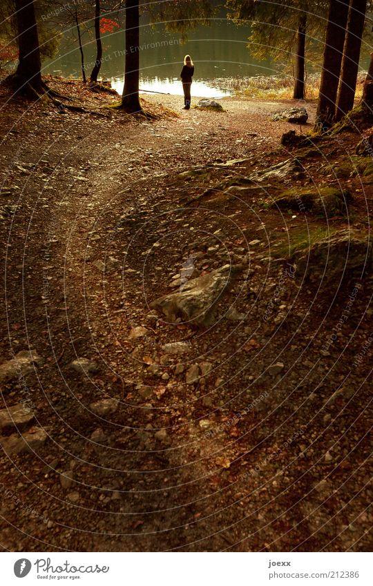 Ankommen Frau Erwachsene Leben 1 Mensch Natur Wasser Herbst Baum Wald Seeufer Teich entdecken Blick stehen Vorsicht ruhig Gefühle Kraft Fußweg Waldsee Farbfoto