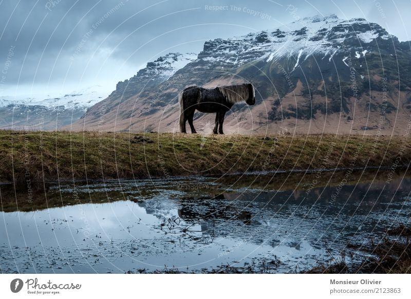 Island Pony Wetter schlechtes Wetter Unwetter Berge u. Gebirge Tier Pferd Gefühle Stimmung Island Ponys Schnee Farbfoto Gedeckte Farben Außenaufnahme