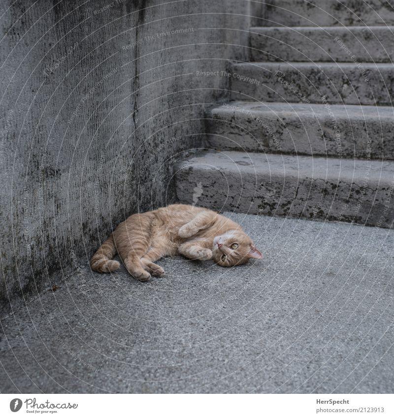 Einfach mal liegen bleiben Katze schön rot Erholung Tier ruhig Wand Mauer grau braun Zufriedenheit Treppe weich Pause Dorf